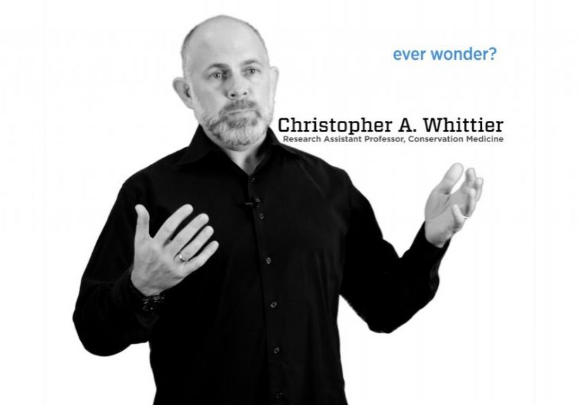 Chris Whittier_Ever Wonder_video thumbnail